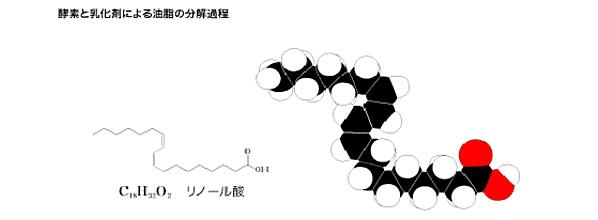 酵素と乳化剤による油脂の分解過程
